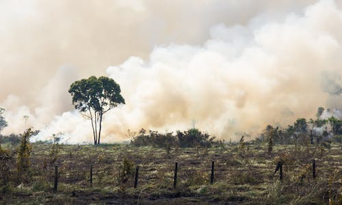 From the ashes of forest fires, a new deal for nature must emerge