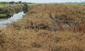 Study finds widespread damage to Southeast Asia's peatlands—and palm oil plantations are not the only ones to blame