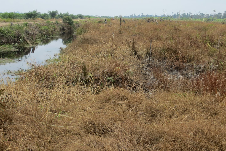 Drained peatland