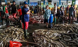 As Covid-19 hit seafood sales, Indonesian fishers worry about sinking livelihood