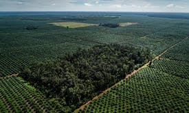 How is the world's biggest palm oil trader living up to its no-deforestation promise?