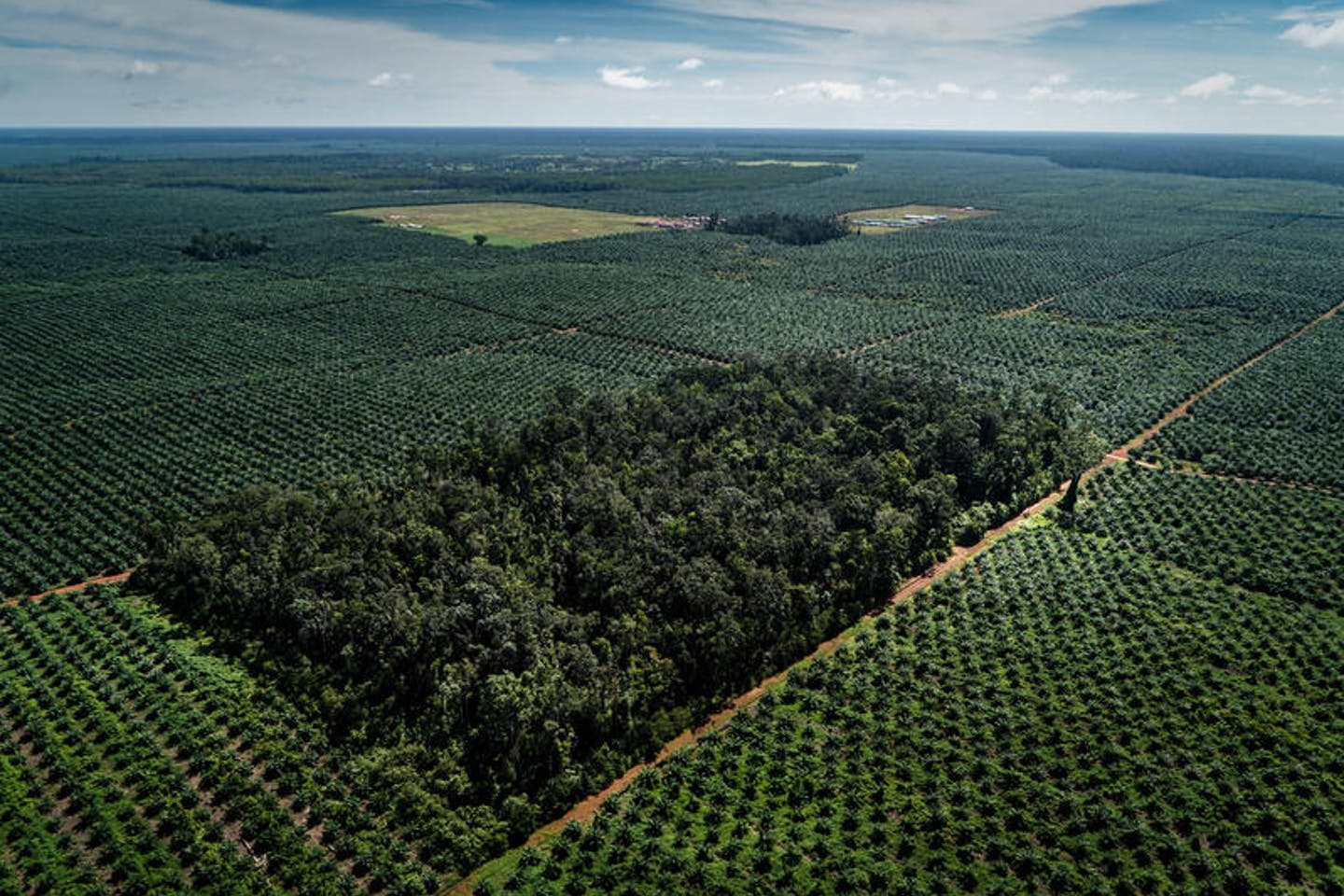 A new Greenpeace International investigation has revealed that Wilmar International, the world's largest palm oil trader, is still linked to forest destruction for palm oil almost five years after committing to end deforestation.[1]
