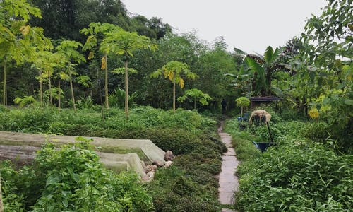 Defending food security in Singapore: Could food forests protect our future?