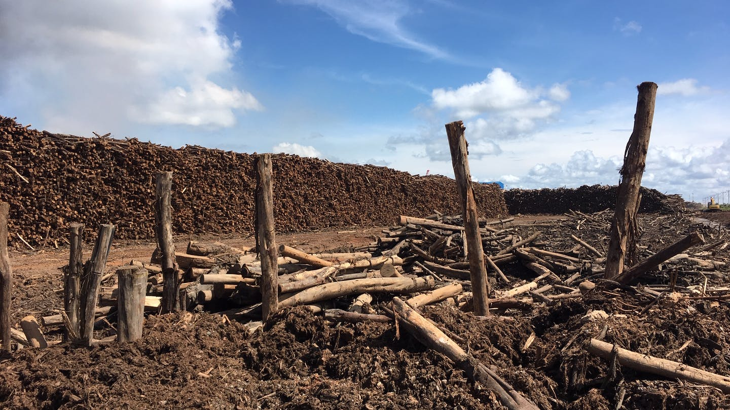 A log yard at Asia Pulp & Paper's OKI mill in South Sumatra