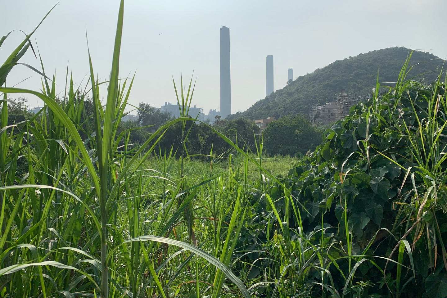 A coal-fired power station on Lamma Island, Hong Kong. Image: Robin Hicks/Eco-Business