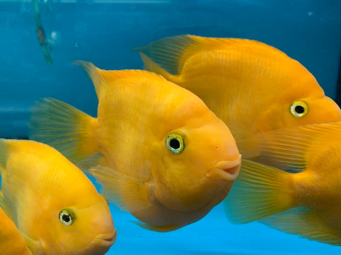 Fishhave been known to have long-term memories, exhibit culture and build complex nests.