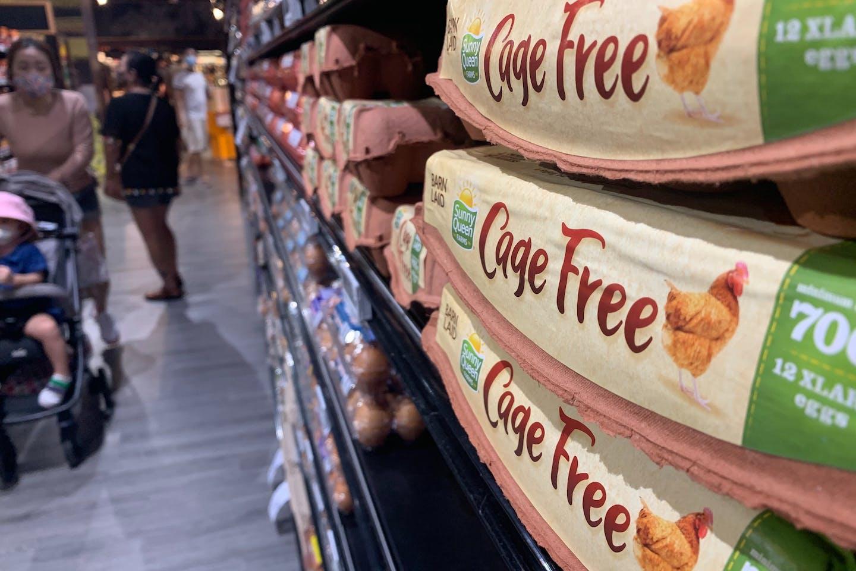 cage free eggs supermarket2