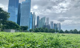 Singapore opens sustainable finance research and talent development hub
