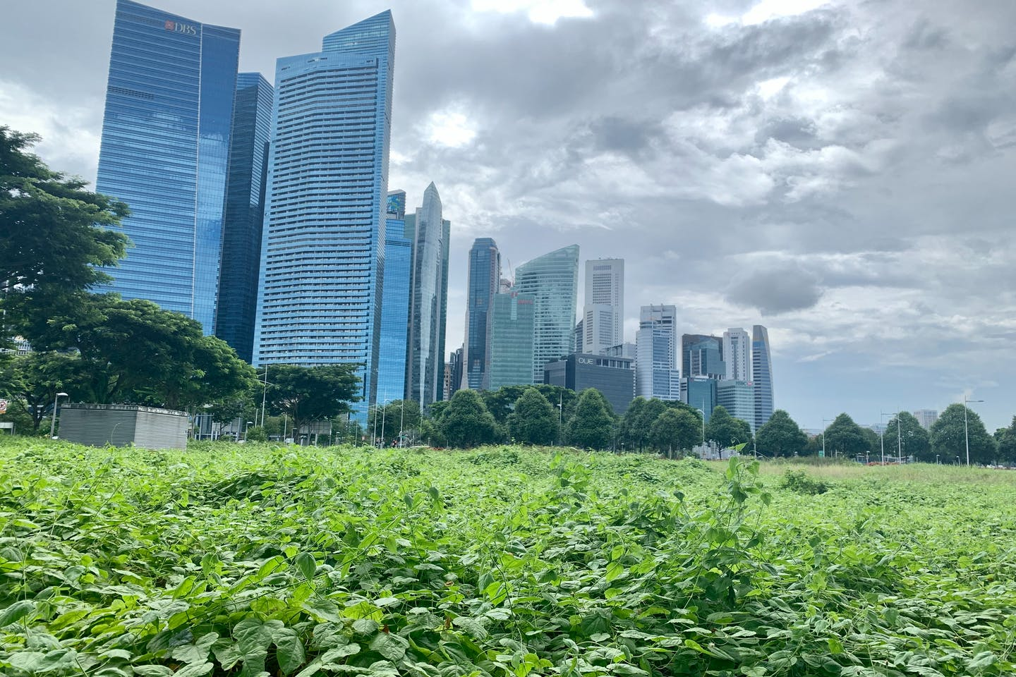 Singapore's central business district. Image: Robin Hicks/Eco-Business