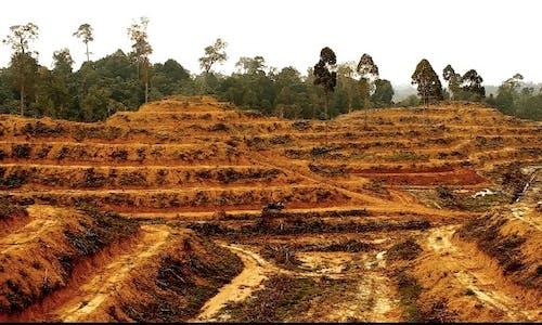 Palm oil industry failing to honour 2020 no-deforestation pledges