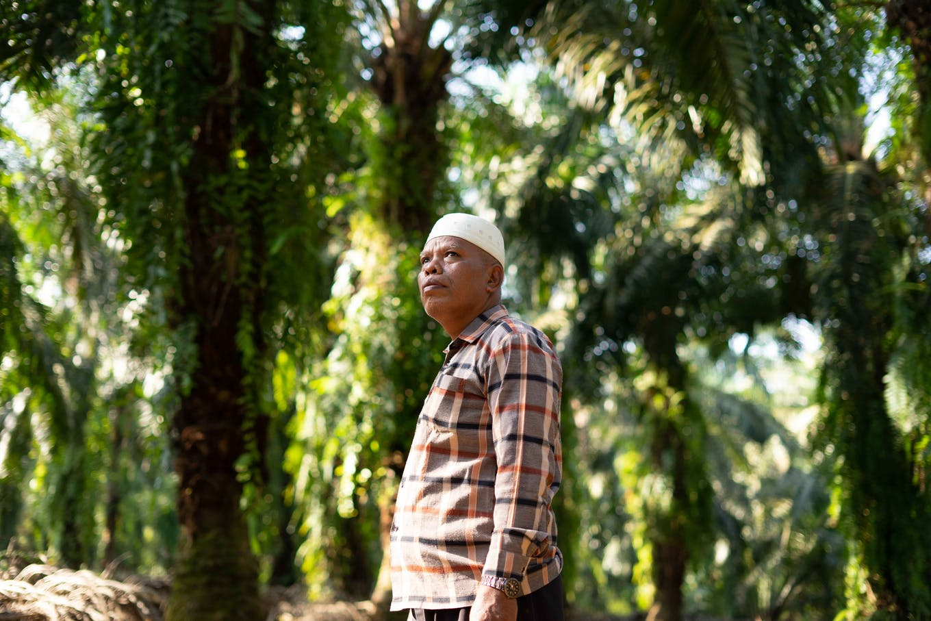 An independent palm oil farmer in Indonesia.