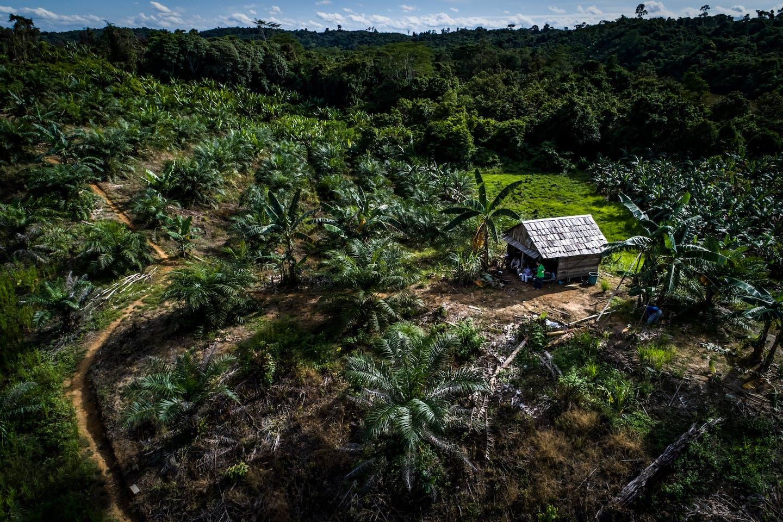 Indonesia EVs render biofuels moot