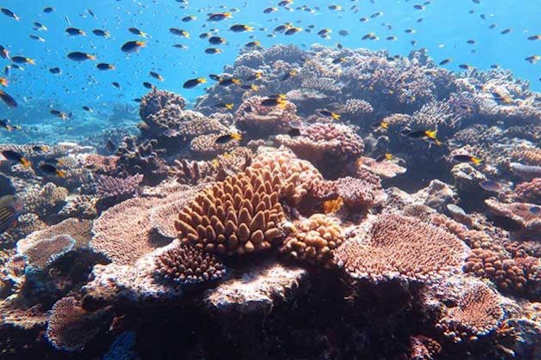 ocean biodiverisity 1