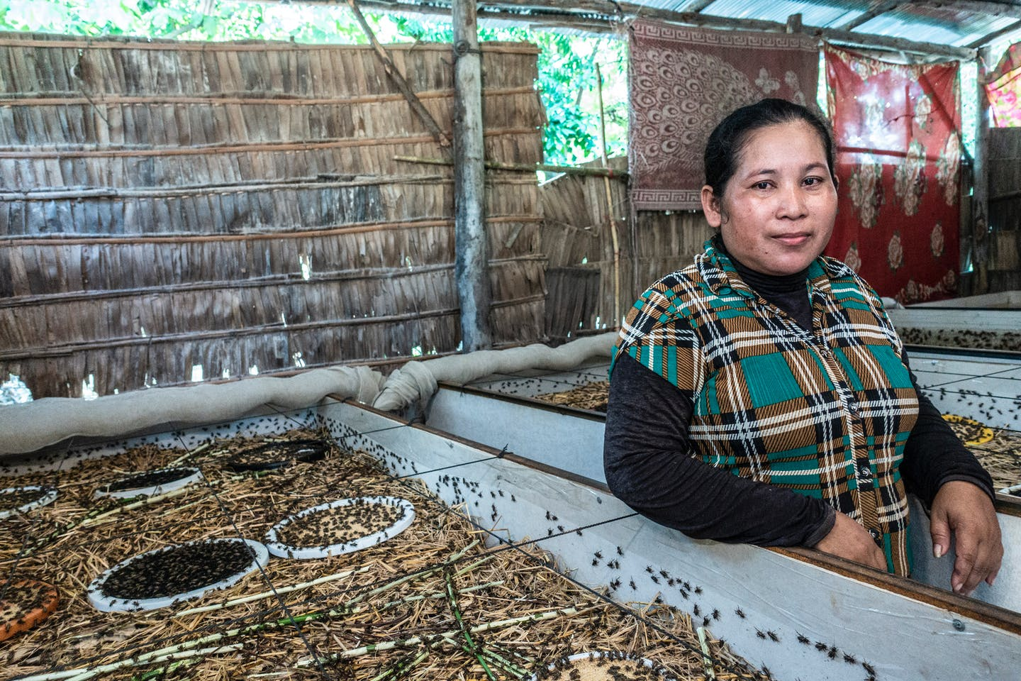 Former textile factory worker Ngo Sinoun, 37, is now an insect farmer. to Image: Roberto Traina