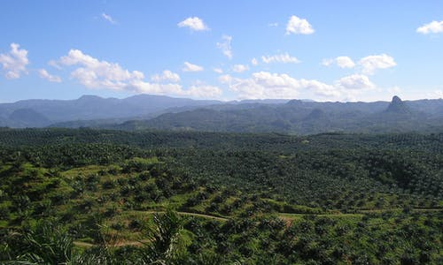 India can stop palm oil deforestation in Southeast Asia
