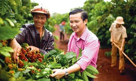 Can better traceability brew up a sustainable recipe for coffee?