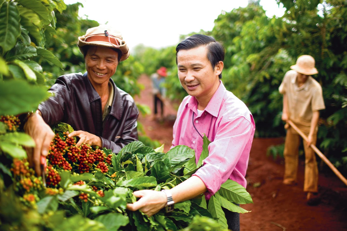 Olam coffee Vietnam