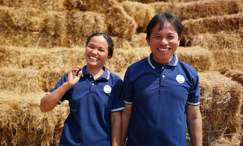 The race against time to cut rice's carbon footprint