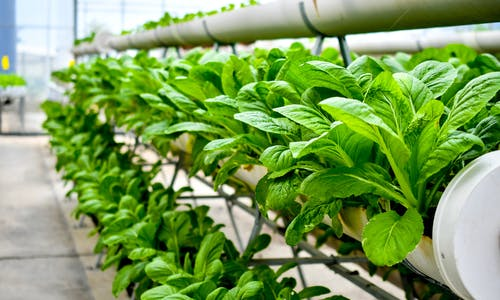Vertical farms 'underserved' when it comes to new seed varieties