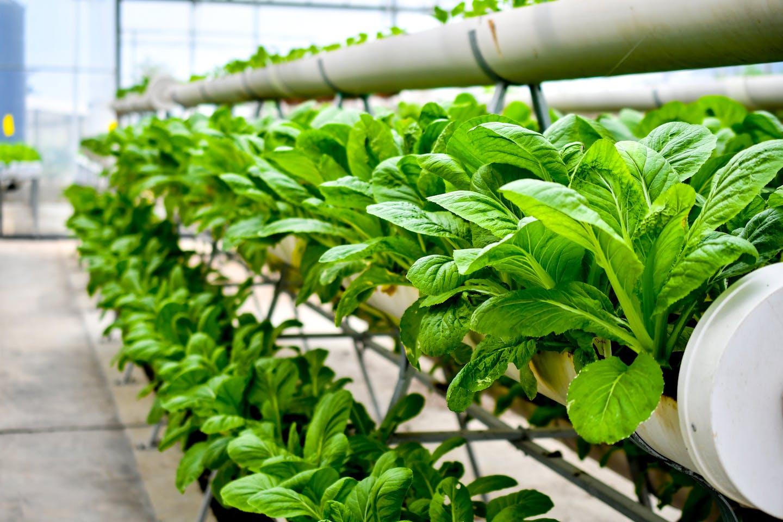 organic vertical farm
