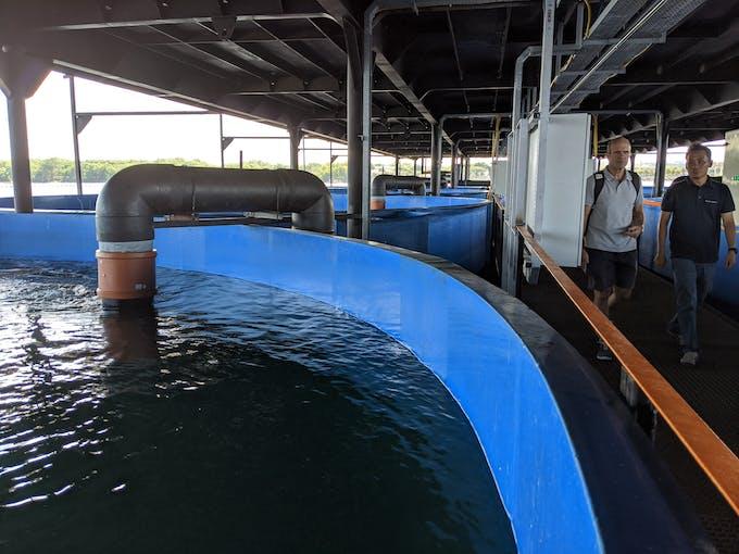 SAT recirculating aquaculture system