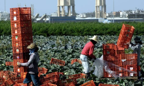 Labour abuse fears rise for Thai migrant workers in Israel under new deal