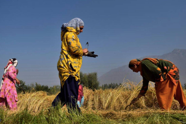 Kashmiri farmers