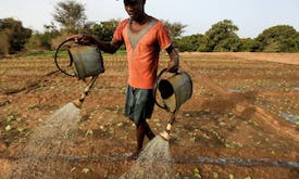 Quick fix for hunger and climate goals? More spending on small farmers
