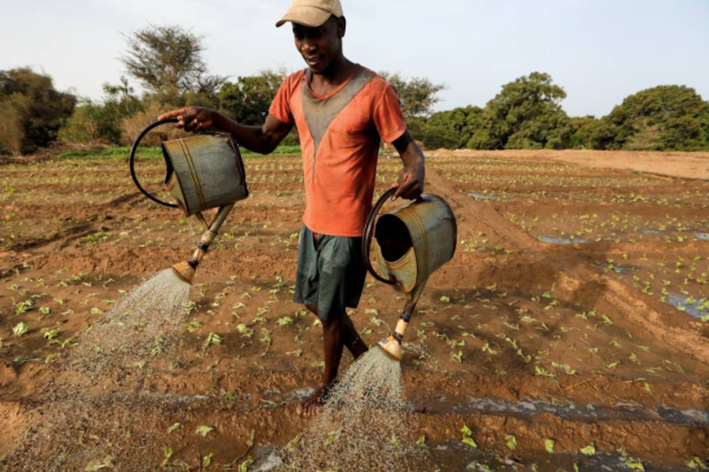 A farm worker manually irrigates a salad field, amid the outbreak of the coronavirus disease in Thies, Senegal.