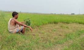 Drought and hunger drive Nepal farmers to India, defying Covid ban