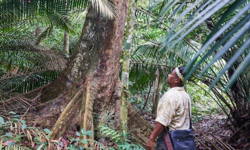 In Malaysia, the fate of a peat forest relies on a powerful state official