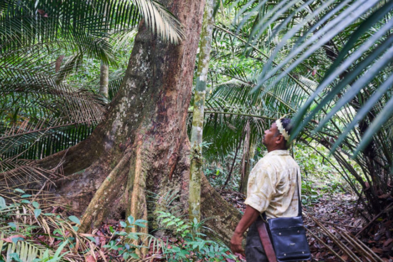 Kuala Langat North Forest Reserve, Malaysia