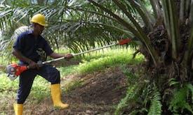 Sri Lanka to ban palm oil imports, raze plantations over environmental impacts