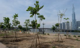 Vietnam to plant 1 billion trees — but how?