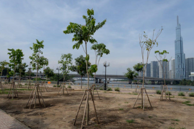 Trees Saigon River