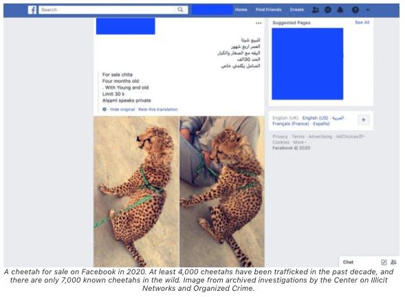 Facebook illegal wildlife