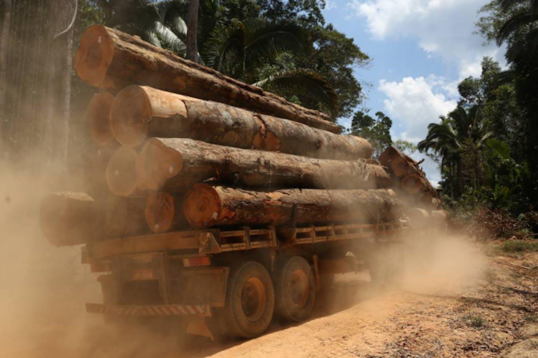 logs cut from the Bom Retiro deforestation area
