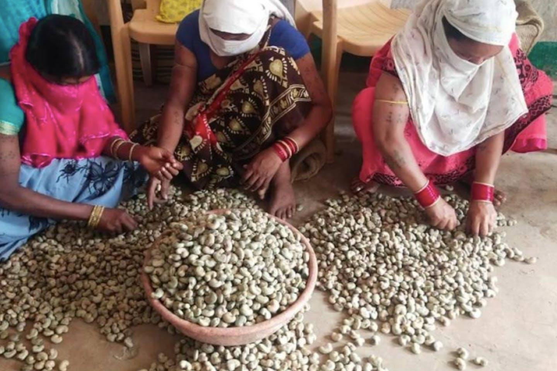 Women working at the cashewnut processing unit in Muli village of Chhattisgarh, India
