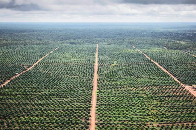 A palm oil plantation owned byPT Agrinusa Persada Mulia