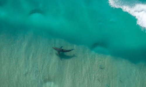 How a bird's eye view is teaching usto be not (so) afraid of sharks