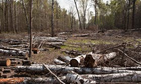 Study fails to establish link between increased deforestation and Covid crisis
