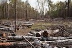 Deforestation of Khimki Forest