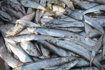 'Sustainable' seafood certification boosts company share prices: study