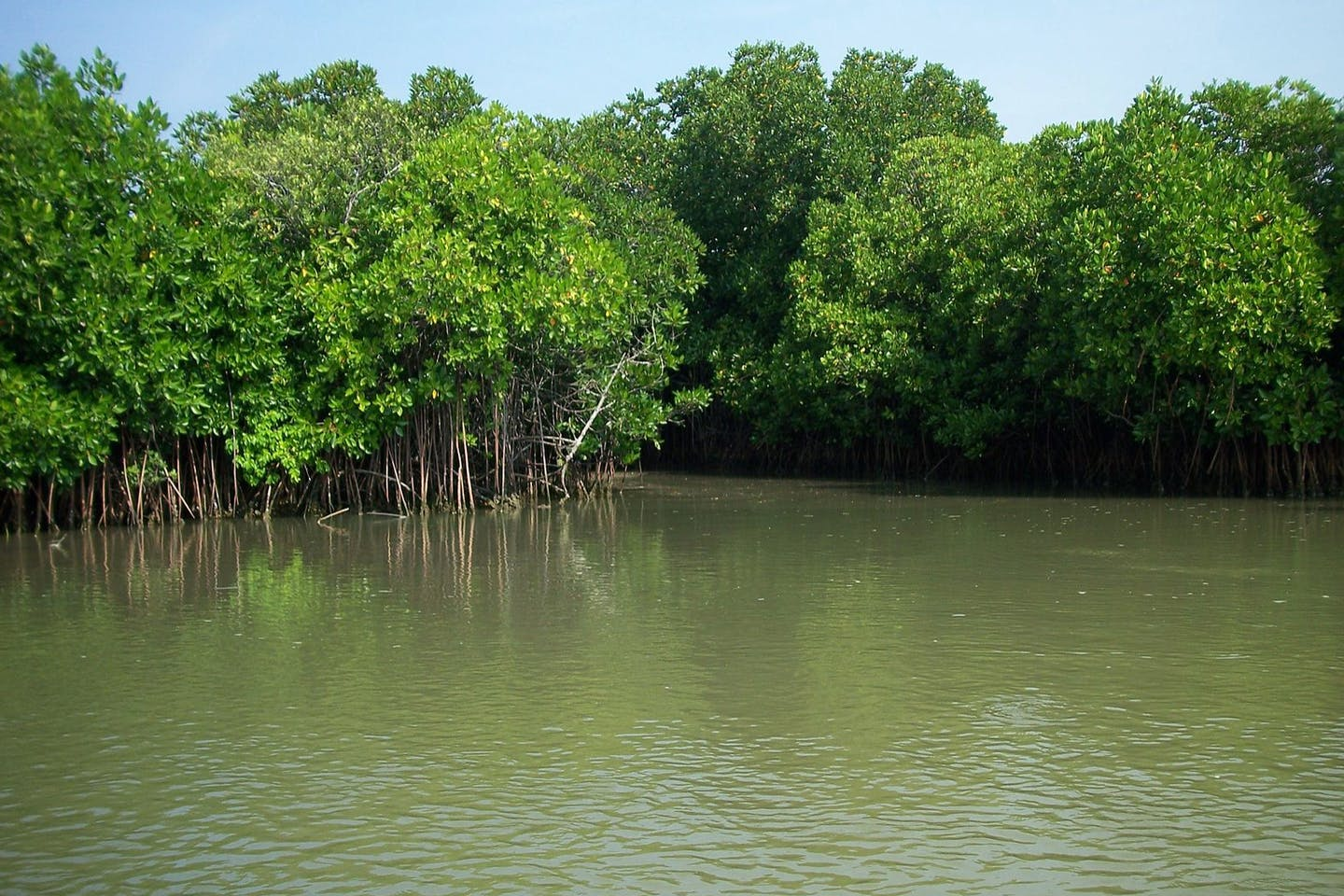 Mangroves in India