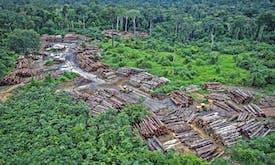 Countering Bolsonaro's UN speech, Greenpeace reveals Amazon deforestation photos