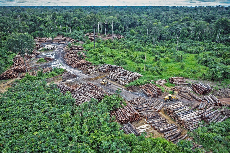Amazon illegal logging