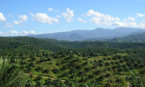 Connections to coal mining add to Indonesian palm oil sector's risk for buyers
