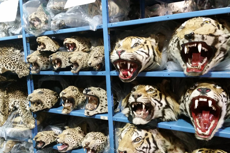 illegal wildlife property