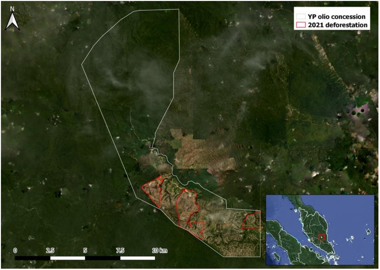 Deforestation in YP Olio's concession in 2021. Image: Chain Reaction Research