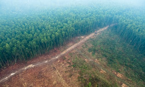 Paper giants' expansion plans raise fears of increased deforestation in Indonesia